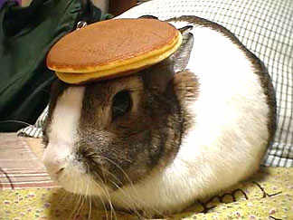 full-1886-19259-rabbit_with_pancake_on_head.jpg