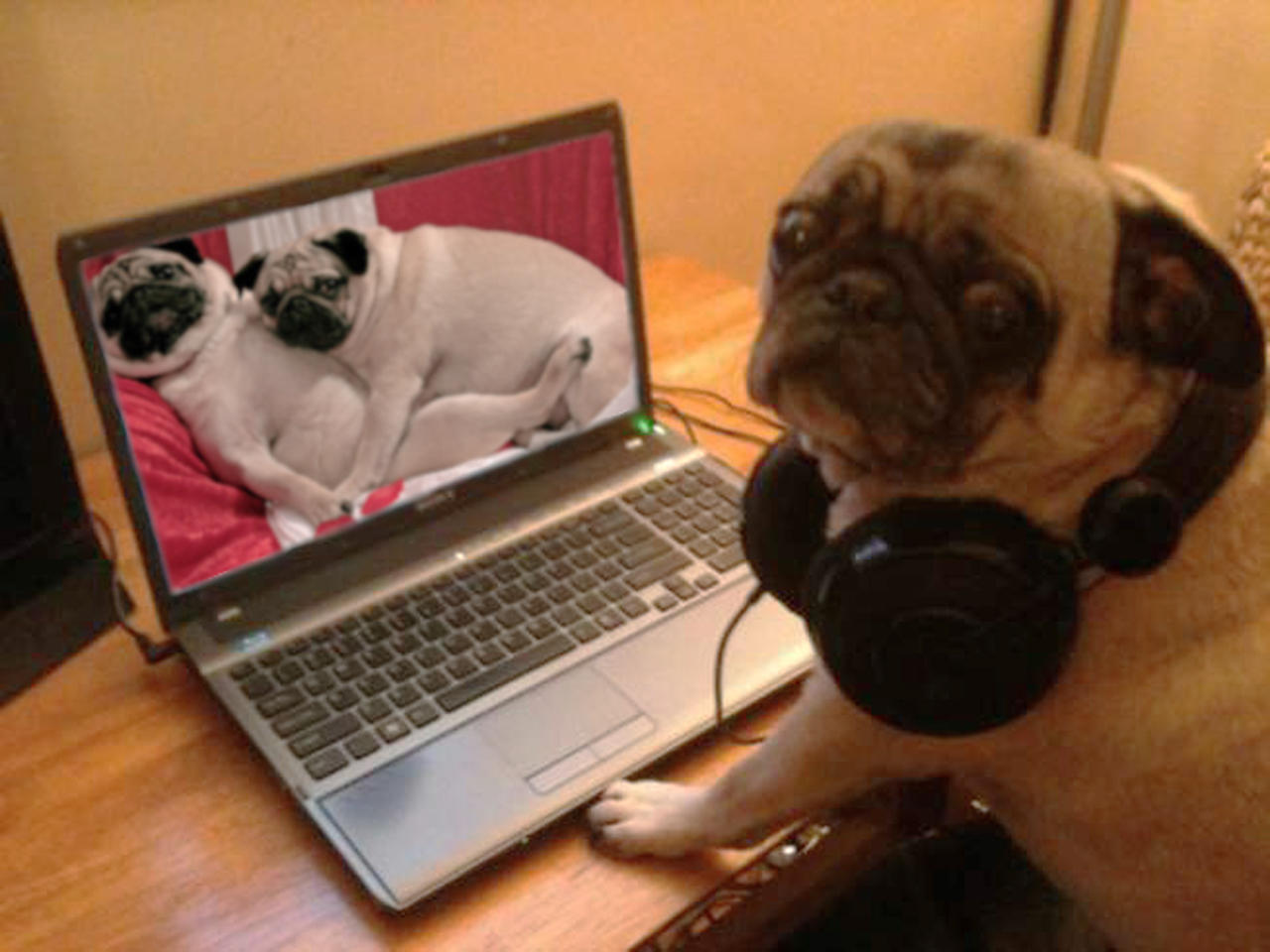 http://simhq.com/forum/files/usergals/2012/05/full-6351-34150-pug.jpg